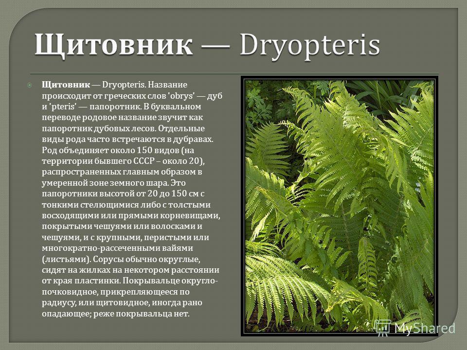 Щитовник Dryopteris. Название происходит от греческих слов 'obrys' дуб и 'pteris' папоротник. В буквальном переводе родовое название звучит как папоротник дубовых лесов. Отдельные виды рода часто встречаются в дубравах. Род объединяет около 150 видов