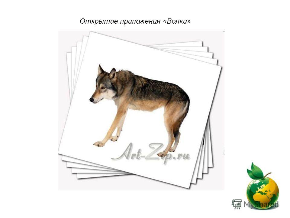 Открытие приложения «Волки»