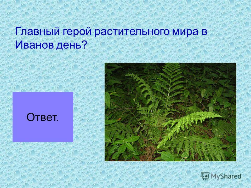 Главный герой растительного мира в Иванов день? Ответ.
