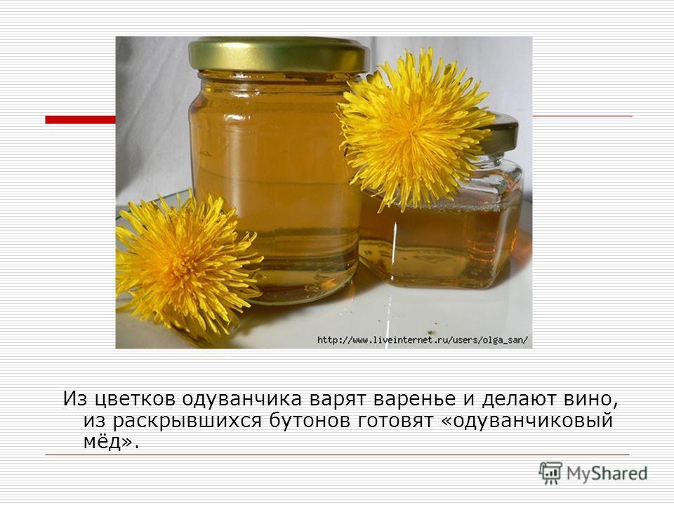 Из цветков одуванчика варят варенье и делают вино, из раскрывшихся бутонов готовят «одуванчиковый мёд».
