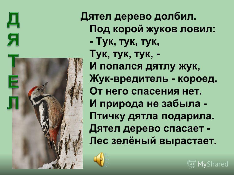 Дятел дерево долбил. Под корой жуков ловил: - Тук, тук, тук, Тук, тук, тук, - И попался дятлу жук, Жук-вредитель - короед. От него спасения нет. И природа не забыла - Птичку дятла подарила. Дятел дерево спасает - Лес зелёный вырастает.