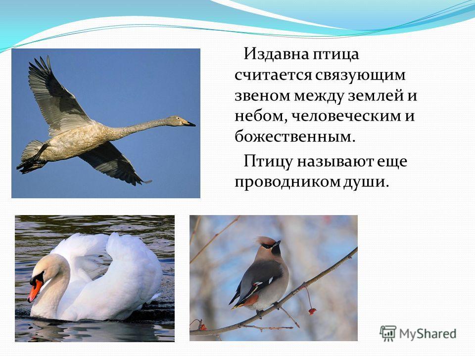 Издавна птица считается связующим звеном между землей и небом, человеческим и божественным. Птицу называют еще проводником души.
