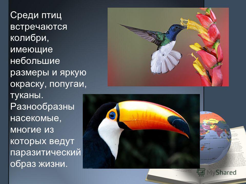 Среди птиц встречаются колибри, имеющие небольшие размеры и яркую окраску, попугаи, туканы. Разнообразны насекомые, многие из которых ведут паразитический образ жизни.