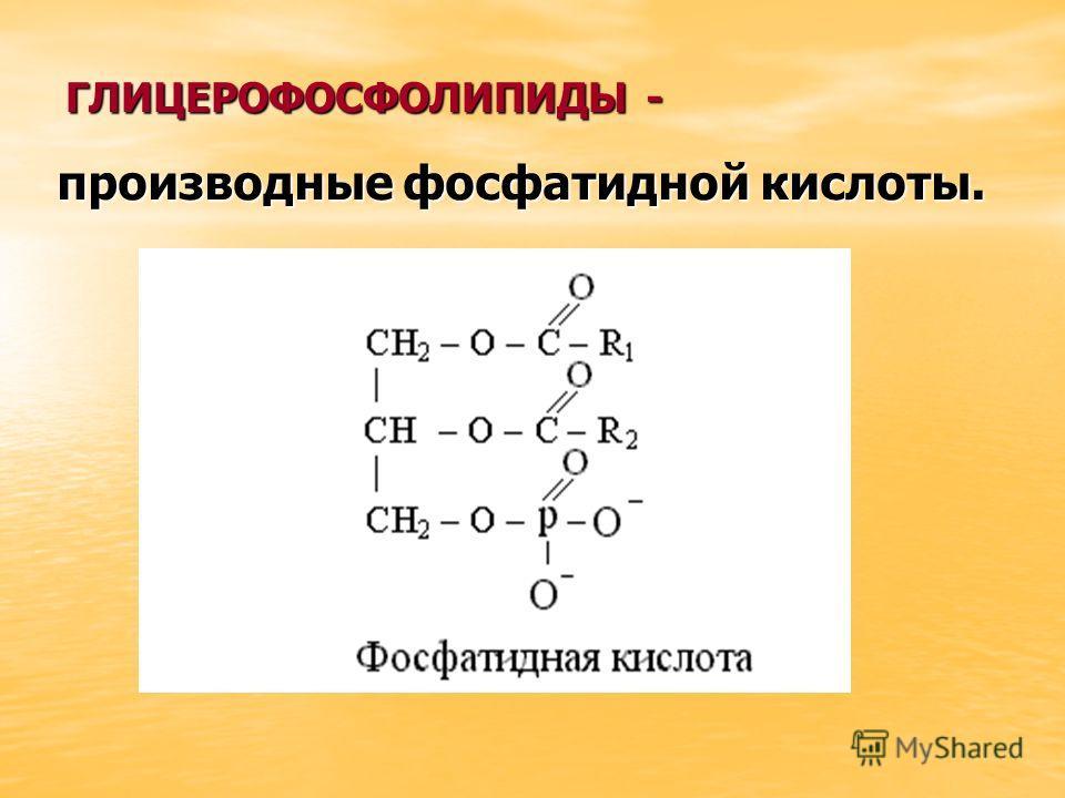 ГЛИЦЕРОФОСФОЛИПИДЫ - производные фосфатидной кислоты.