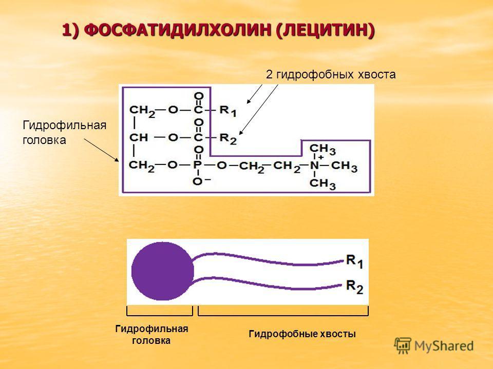 Гидрофильная головка Гидрофобные хвосты 2 гидрофобных хвоста Гидрофильная головка 1) ФОСФАТИДИЛХОЛИН (ЛЕЦИТИН)