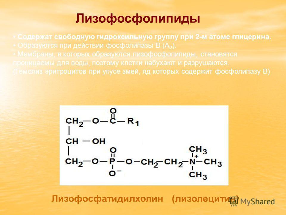 Лизофосфолипиды Лизофосфатидилхолин (лизолецитин) Содержат свободную гидроксильную группу при 2-м атоме глицерина. Образуются при действии фосфолипазы В (А 2 ). Мембраны, в которых образуются лизофосфолипиды, становятся проницаемы для воды, поэтому к