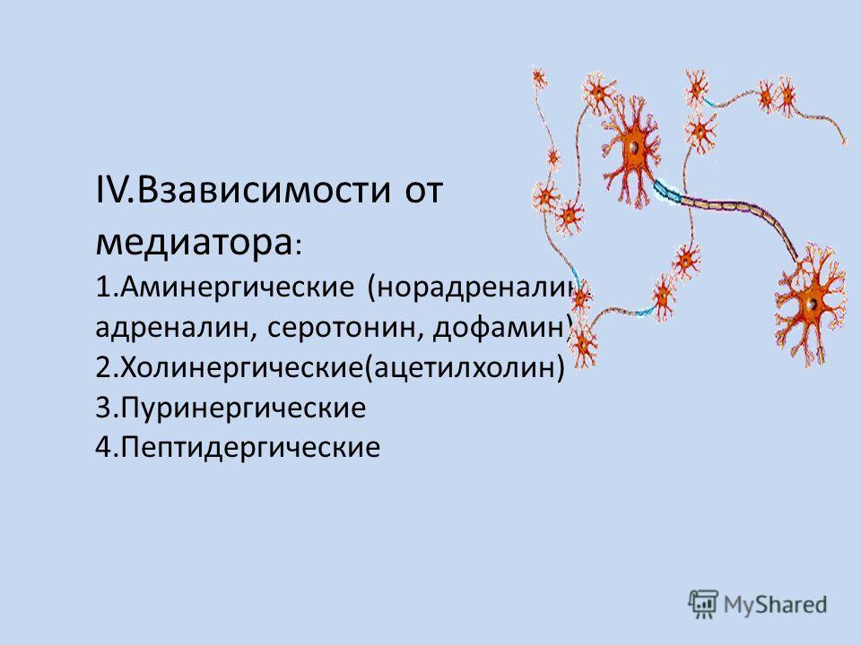 IV.Взависимости от медиатора : 1.Аминергические (норадреналин, адреналин, серотонин, дофамин) 2.Холинергические(ацетилхолин) 3.Пуринергические 4.Пептидергические