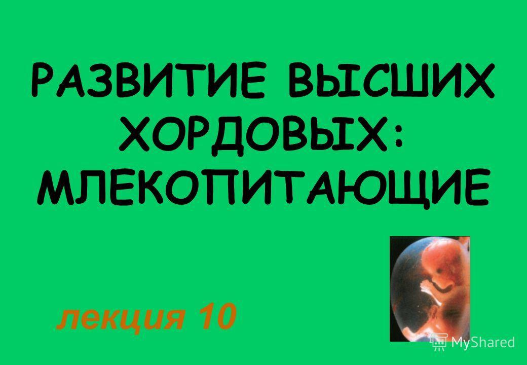РАЗВИТИЕ ВЫСШИХ ХОРДОВЫХ: МЛЕКОПИТАЮЩИЕ лекция 10