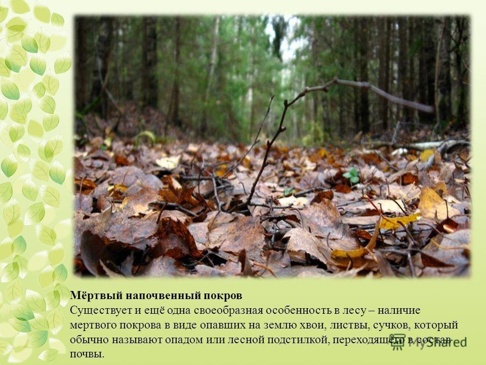 Мёртвый напочвенный покров Существует и ещё одна своеобразная особенность в лесу – наличие мертвого покрова в виде опавших на землю хвои, листвы, сучков, который обычно называют опадом или лесной подстилкой, переходящего в состав почвы.