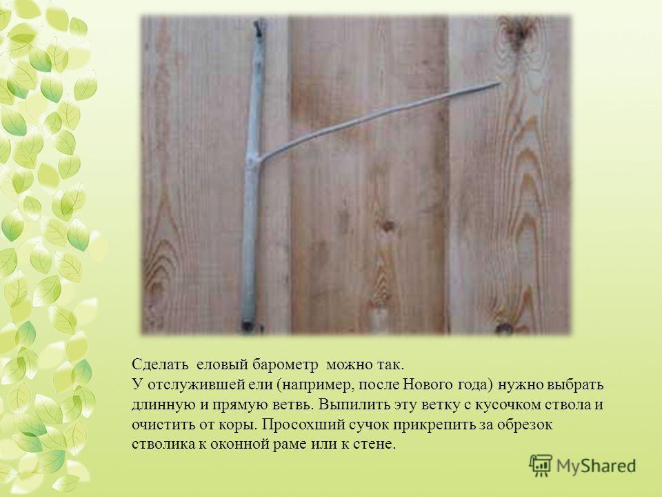 Сделать еловый барометр можно так. У отслужившей ели (например, после Нового года) нужно выбрать длинную и прямую ветвь. Выпилить эту ветку с кусочком ствола и очистить от коры. Просохший сучок прикрепить за обрезок стволика к оконной раме или к стен