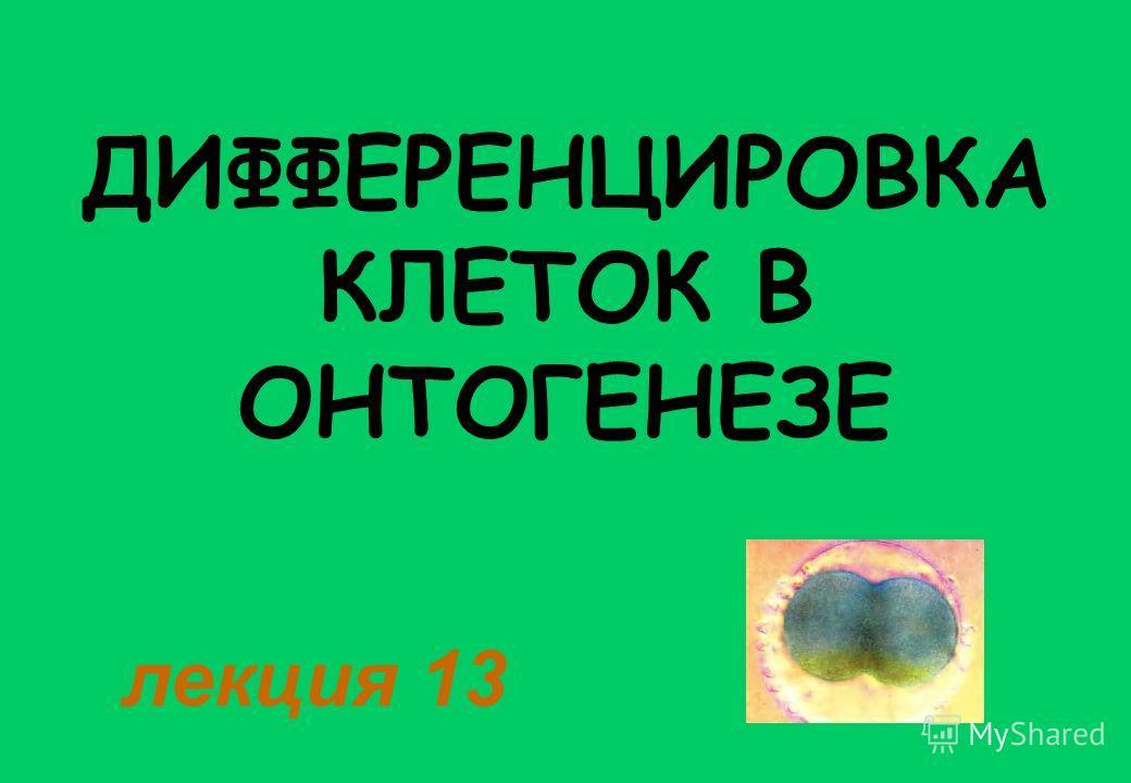 ДИФФЕРЕНЦИРОВКА КЛЕТОК В ОНТОГЕНЕЗЕ лекция 13