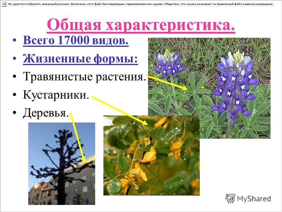 Общая характеристика. Всего 17000 видов. Жизненные формы: Травянистые растения. Кустарники. Деревья.