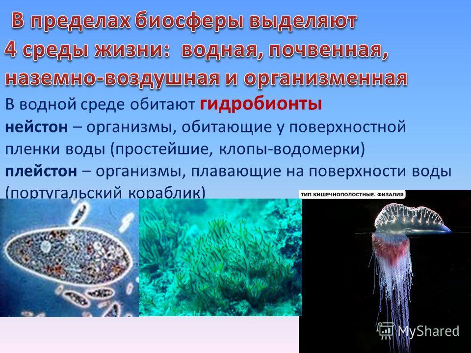 В водной среде обитают гидробионты нейстон – организмы, обитающие у поверхностной пленки воды (простейшие, клопы-водомерки) плейстон – организмы, плавающие на поверхности воды (португальский кораблик)