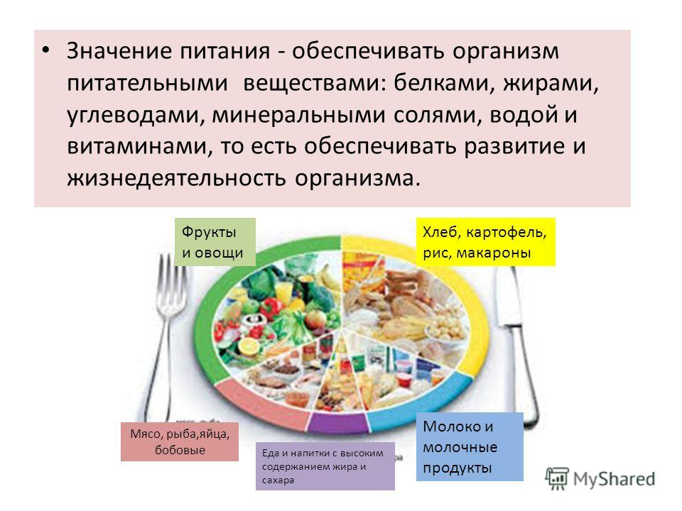 Значение питания - обеспечивать организм питательными веществами: белками, жирами, углеводами, минеральными солями, водой и витаминами, то есть обеспечивать развитие и жизнедеятельность организма. Фрукты и овощи Хлеб, картофель, рис, макароны Молоко