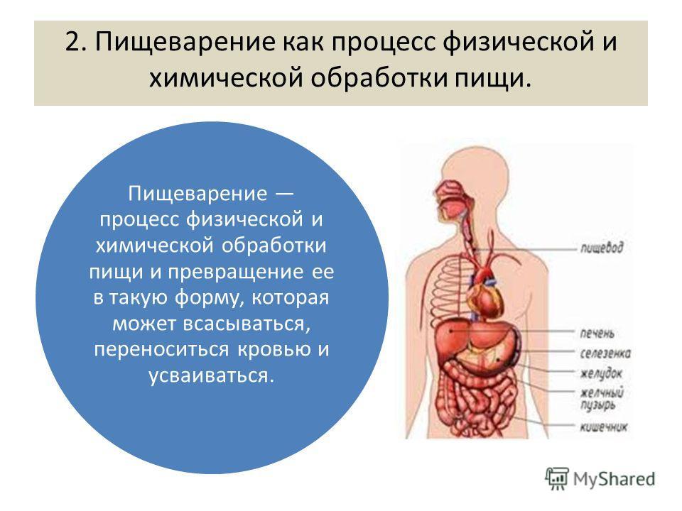 2. Пищеварение как процесс физической и химической обработки пищи. Пищеварение процесс физической и химической обработки пищи и превращение ее в такую форму, которая может всасываться, переноситься кровью и усваиваться.