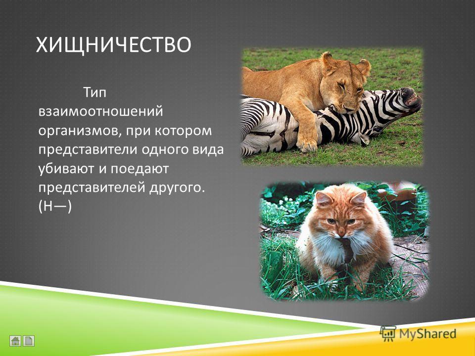 ХИЩНИЧЕСТВО Тип взаимоотношений организмов, при котором представители одного вида убивают и поедают представителей другого. ( Н )