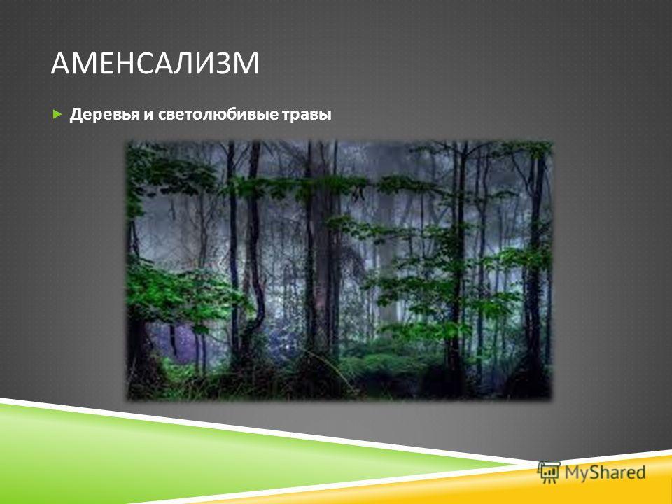 АМЕНСАЛИЗМ Деревья и светолюбивые травы