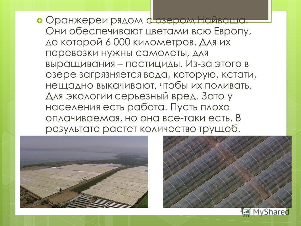 Оранжереи рядом с озером Найваша. Они обеспечивают цветами всю Европу, до которой 6 000 километров. Для их перевозки нужны самолеты, для выращивания – пестициды. Из-за этого в озере загрязняется вода, которую, кстати, нещадно выкачивают, чтобы их пол