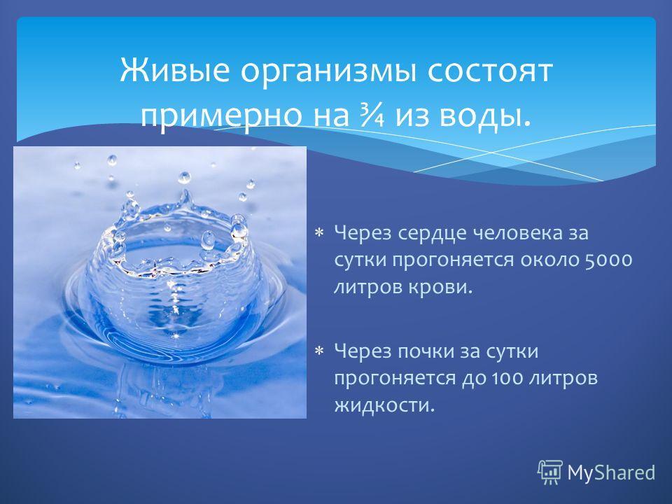 Через сердце человека за сутки прогоняется около 5000 литров крови. Через почки за сутки прогоняется до 100 литров жидкости. Живые организмы состоят примерно на ¾ из воды.