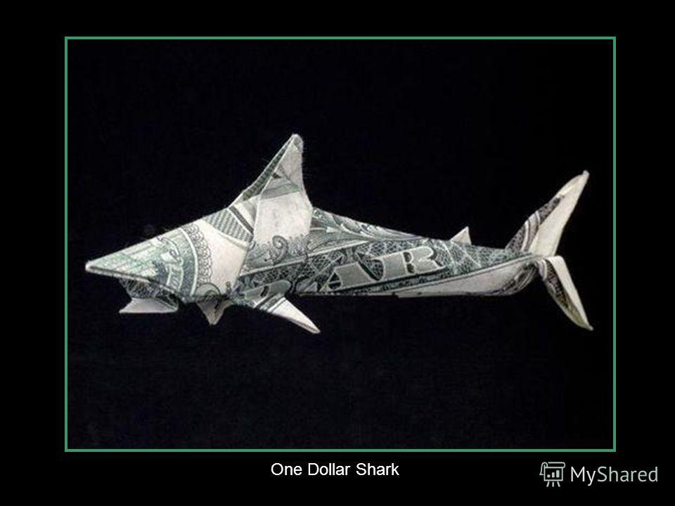One Dollar Hammer-head Shark