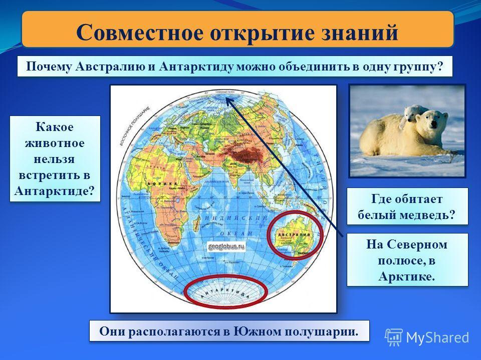 Совместное открытие знаний Почему Австралию и Антарктиду можно объединить в одну группу? Они располагаются в Южном полушарии. Какое животное нельзя встретить в Антарктиде? Какое животное нельзя встретить в Антарктиде? Где обитает белый медведь? На Се