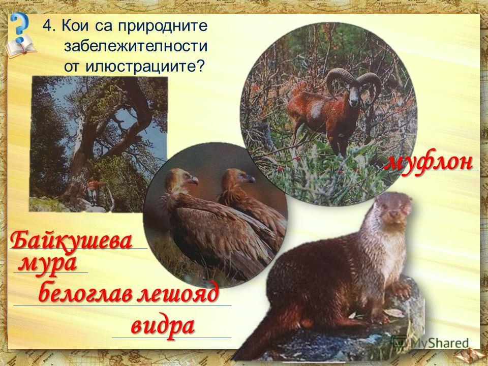 4. Кои са природните забележителности от илюстрациите? Байкушева мура видра муфлон белоглав лешояд