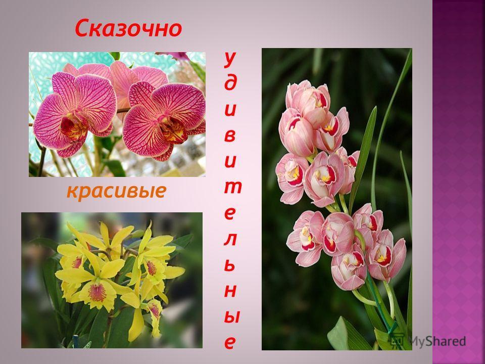 Однажды… Увидев этот чудный цветок Вы полюбите его навсегда!