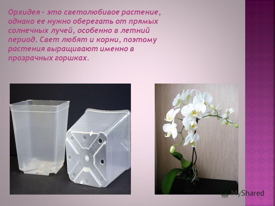 Пересаживают орхидеи методом перевалки. Необходимо приобрести специальный грунт, который состоит большей частью изо мха и коры деревьев. Однако пересаживать растение нужно не чаще одного раза на два года, иначе не будет цветов.