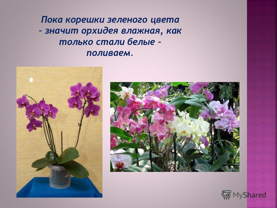 Орхидея – это светолюбивое растение, однако ее нужно оберегать от прямых солнечных лучей, особенно в летний период. Свет любят и корни, поэтому растения выращивают именно в прозрачных горшках.