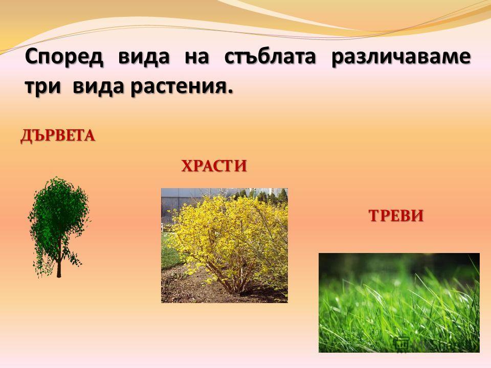 Според вида на стъблата различаваме три вида растения. ДЪРВЕТА ХРАСТИ ТРЕВИ