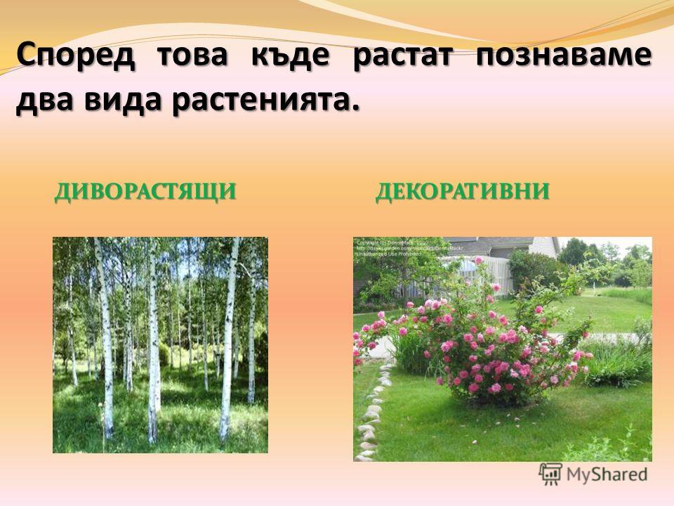 Според това къде растат познаваме два вида растенията. ДИВОРАСТЯЩИДЕКОРАТИВНИ