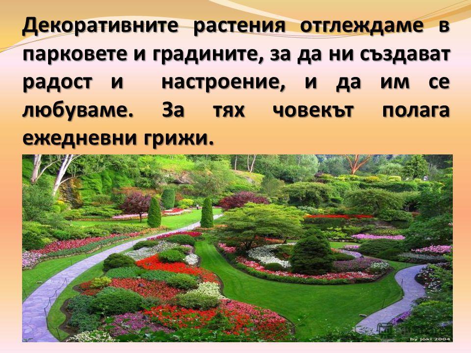 Декоративните растения отглеждаме в парковете и градините, за да ни създават радост и настроение, и да им се любуваме. За тях човекът полага ежедневни грижи.
