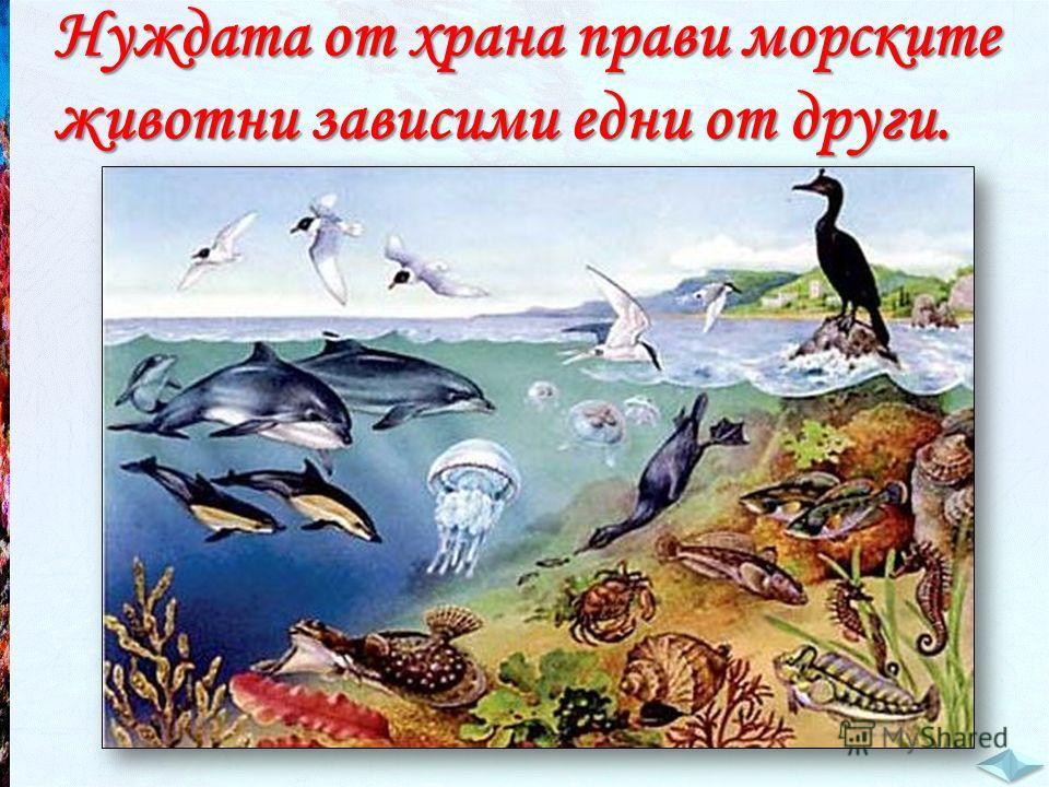Нуждата от храна прави морските животни зависими едни от други.