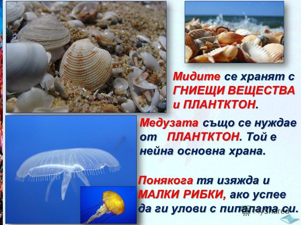 Мидите се хранят с ГНИЕЩИ ВЕЩЕСТВА и ПЛАНТКТОН. Медузата също се нуждае от ПЛАНТКТОН. Той е нейна основна храна. Понякога тя изяжда и МАЛКИ РИБКИ, ако успее да ги улови с пипалата си.