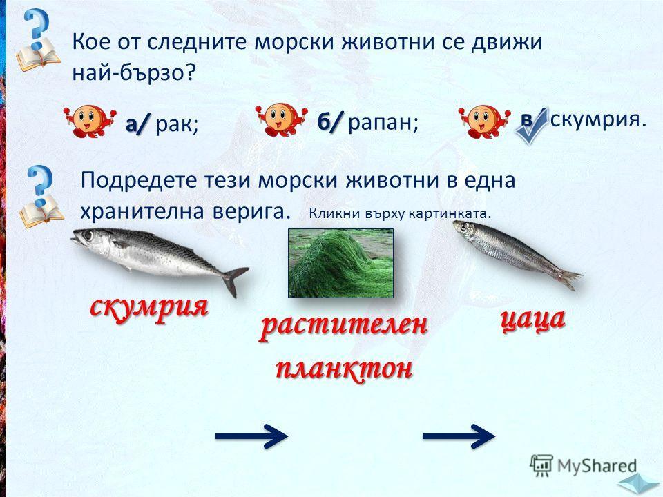 Кое от следните морски животни се движи най-бързо? а/ а/ рак; б/ б/ рапан; в/ в/ скумрия. Подредете тези морски животни в една хранителна верига. Кликни върху картинката. скумрия растителенпланктон цаца