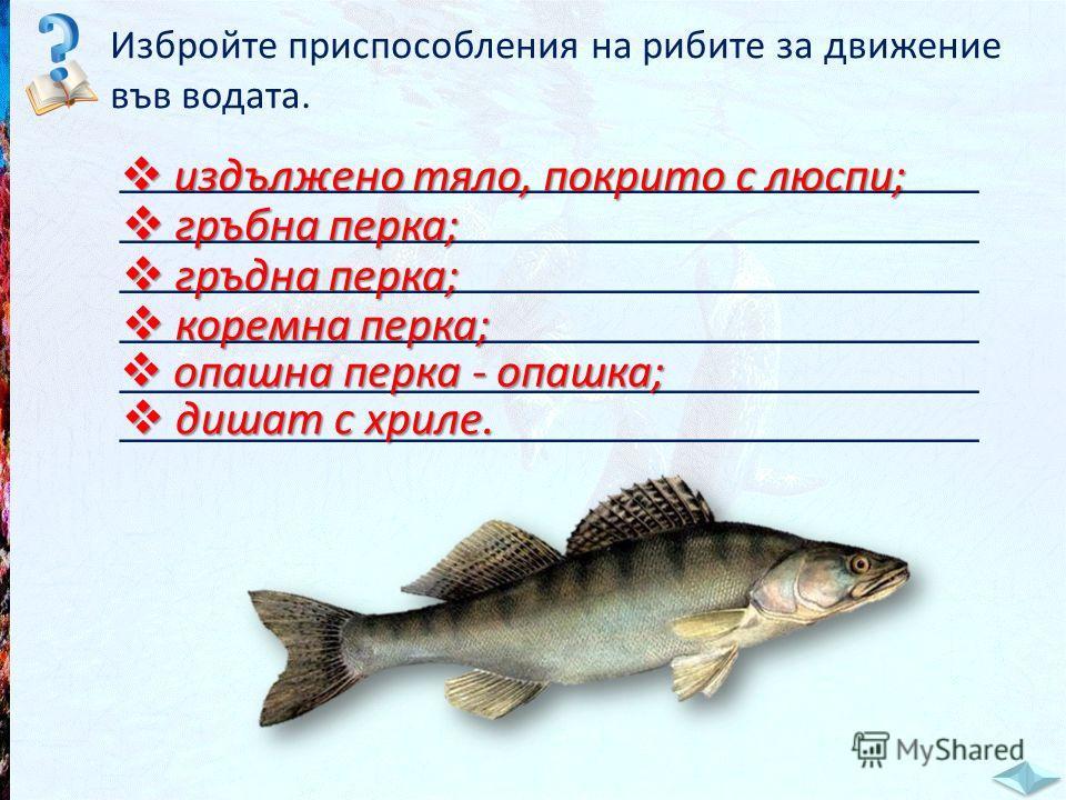 Избройте приспособления на рибите за движение във водата. _____________________________________ издължено тяло, покрито с люспи; издължено тяло, покрито с люспи; гръбна перка; гръбна перка; гръдна перка; гръдна перка; коремна перка; коремна перка; оп
