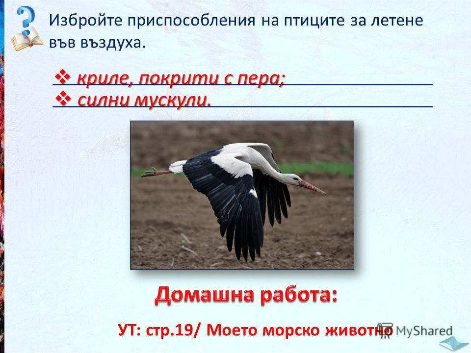 Избройте приспособления на птиците за летене във въздуха. _____________________________________ криле, покрити с пера; криле, покрити с пера; силни мускули. силни мускули. УТ: стр.19/ Моето морско животно
