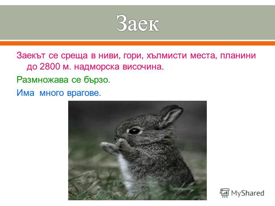 Заекът се среща в ниви, гори, хълмисти места, планини до 2800 м. надморска височина. Размножава се бързо. Има много врагове.