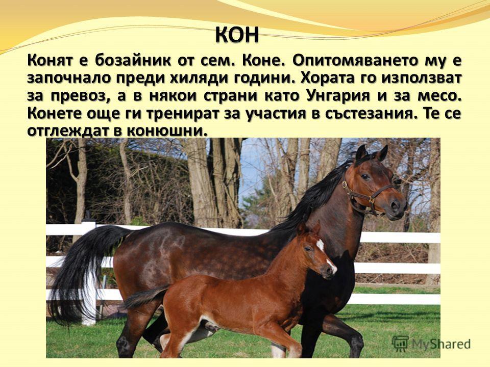 Конят е бозайник от сем. Коне. Опитомяването му е започнало преди хиляди години. Хората го използват за превоз, а в някои страни като Унгария и за месо. Конете още ги тренират за участия в състезания. Те се отглеждат в конюшни.