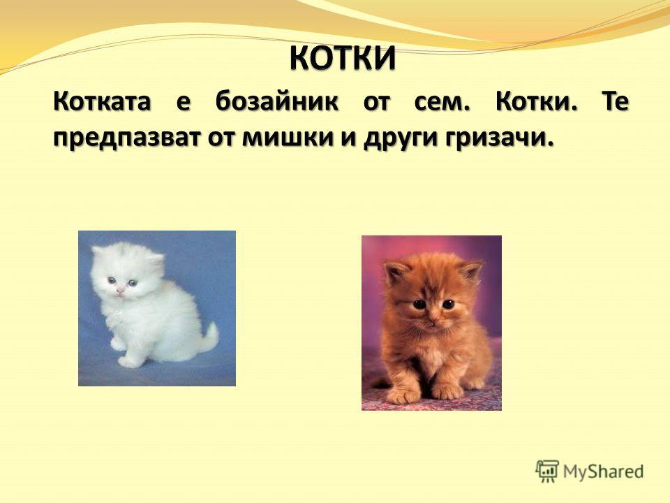 Котката е бозайник от сем. Котки. Те предпазват от мишки и други гризачи.