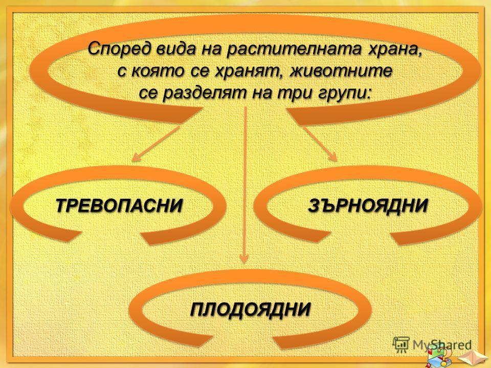 Според вида на растителната храна, с която се хранят, животните се разделят на три групи: Според вида на растителната храна, с която се хранят, животните се разделят на три групи: ТРЕВОПАСНИТРЕВОПАСНИ ПЛОДОЯДНИПЛОДОЯДНИ ЗЪРНОЯДНИЗЪРНОЯДНИ