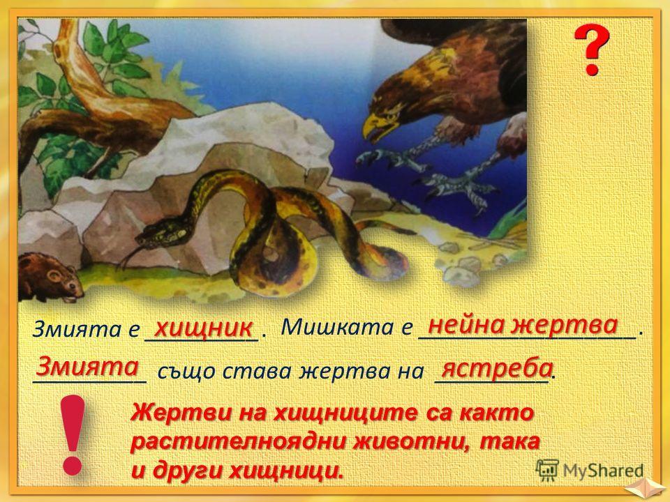Змията е _________. хищник Мишката е _________________. нейна жертва _________ също става жертва на _________. Змията ястреба Жертви на хищниците са както растителноядни животни, така и други хищници.