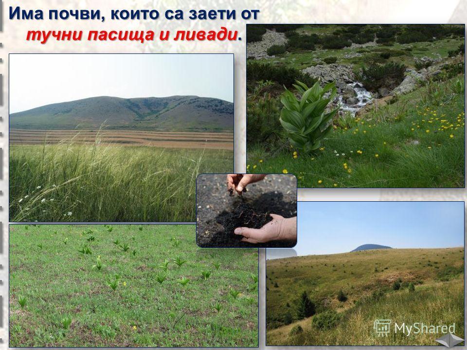 Има почви, които са заети от тучни пасища и ливади.
