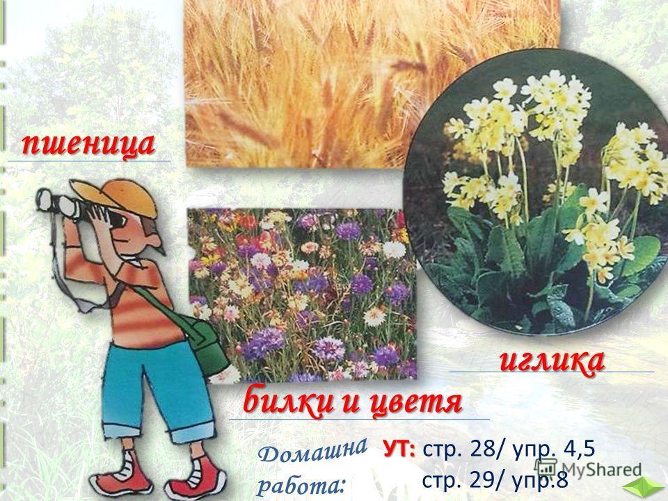 пшеница иглика билки и цветя УТ: УТ: стр. 28/ упр. 4,5 стр. 29/ упр.8
