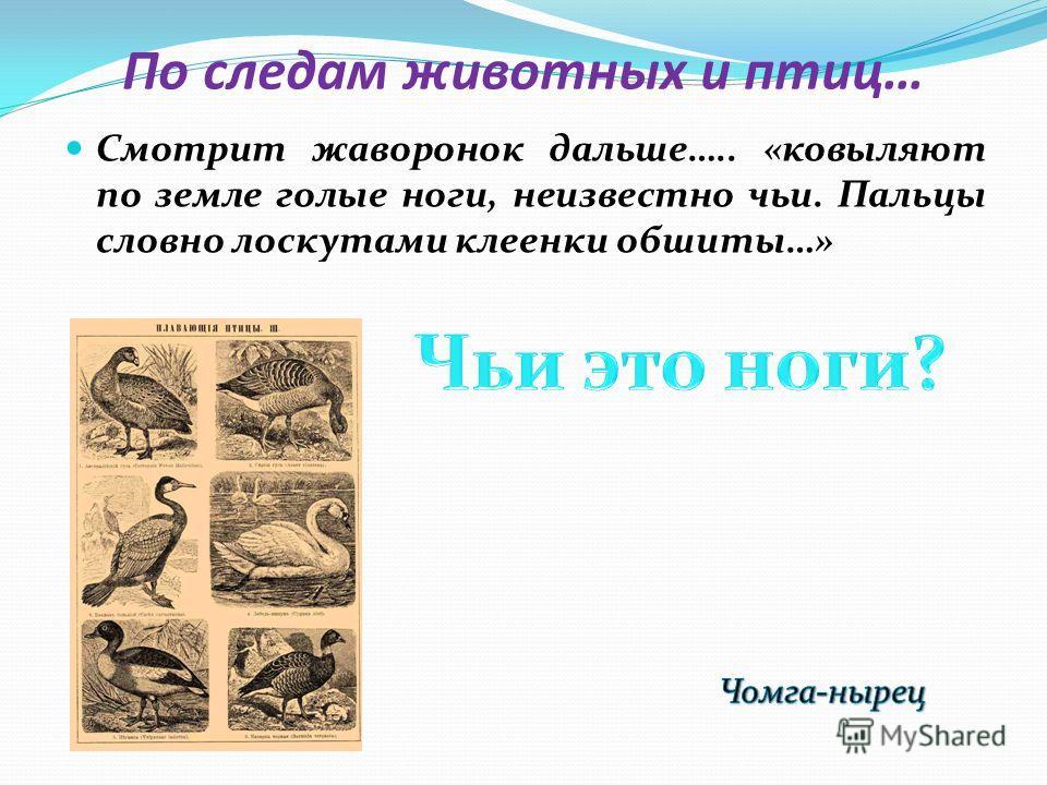 По следам животных и птиц… Смотрит жаворонок дальше….. «ковыляют по земле голые ноги, неизвестно чьи. Пальцы словно лоскутами клеенки обшиты…»