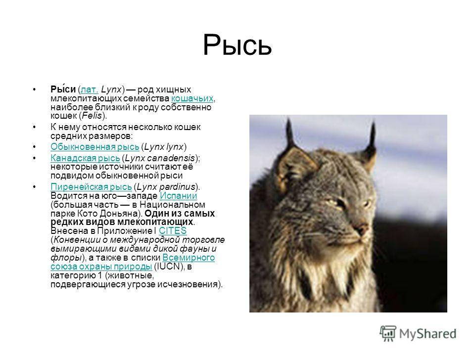 Лесные животные Презентацию подготовила ученица 3 «г» класса Аносова Полина Руководитель проекта: Полякова О.А.