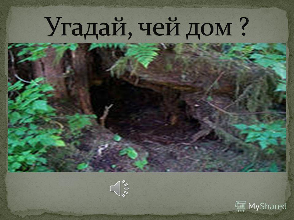 В какой сказке, волк изменил свой голос? Кто главные герои этой сказки? Сколько их было? Волк и семеро козлят.