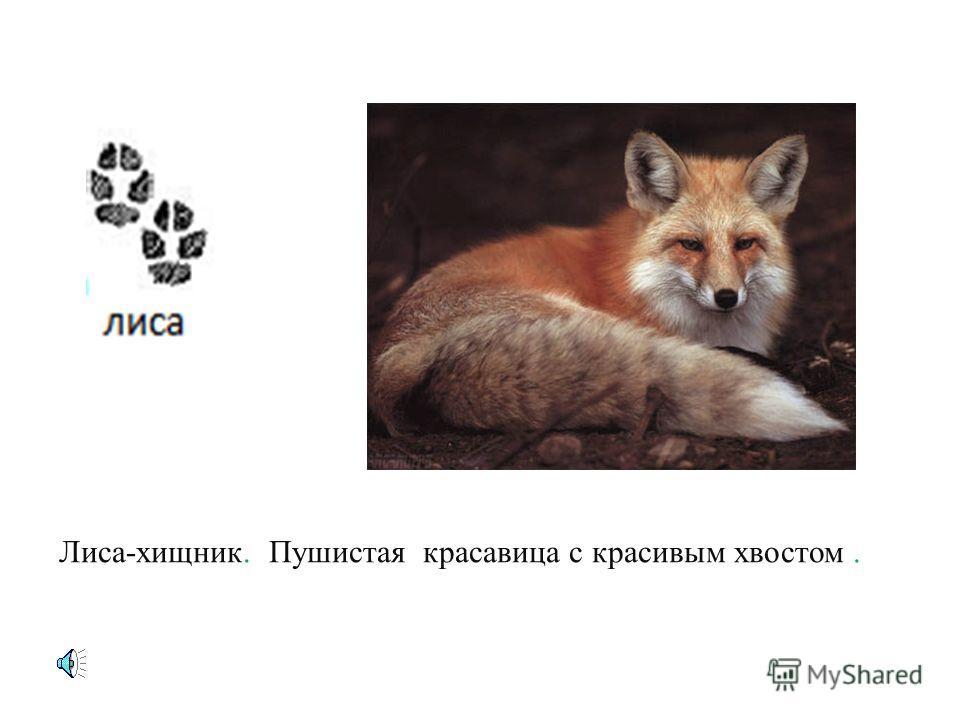 Хищник, похож на собаку. Прирожденный охотник.