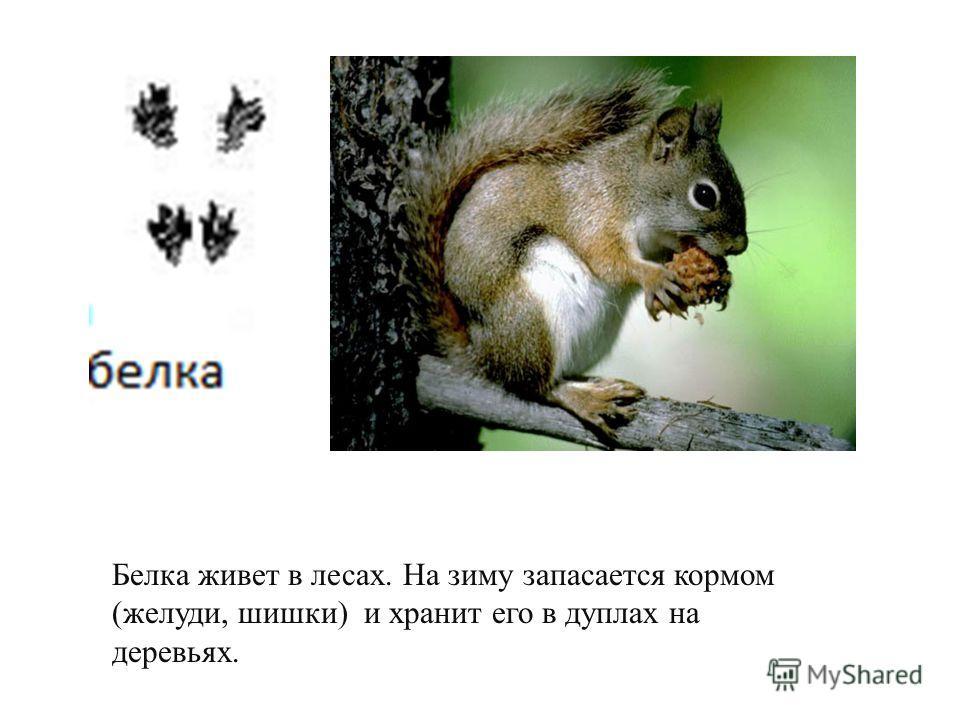 Колючий зверек. Живет в лесах, садах, зарослях кустарников. Ночью занимается поисками корма. Oсновная пища разные насекомые.