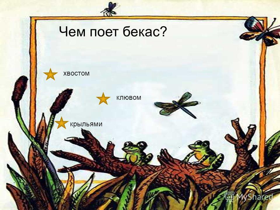 Где живет плавунчик? в доме у воды в лесу